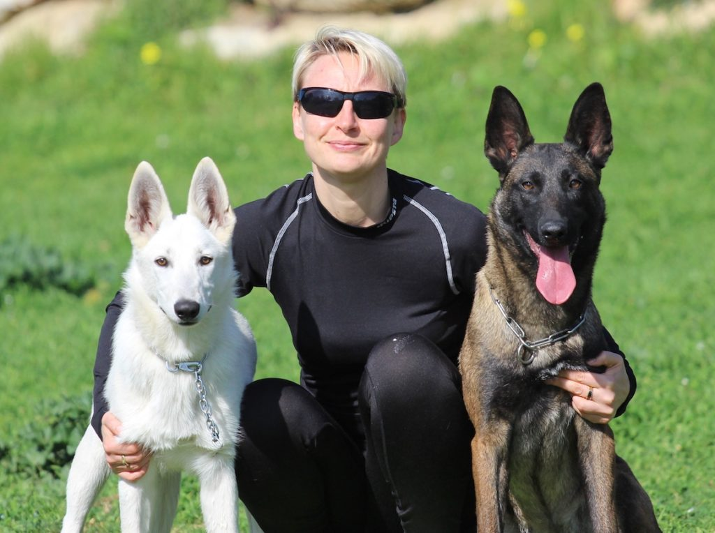 Belgian Malinois versus White Shepherd Which Dog Breed is Better for Me 4