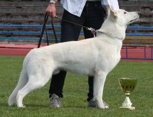 EST PJK (IPO A+B) CH, MULT CH Born to Win White General IPO1, FH1, PJK3, KK3, BH