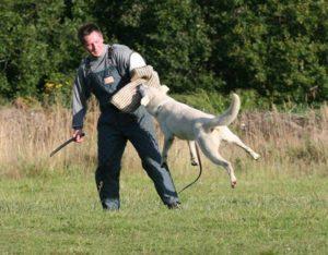 Koerauudised aastal 2009 25