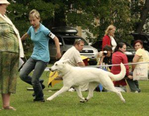 DogNews Year 2008 7