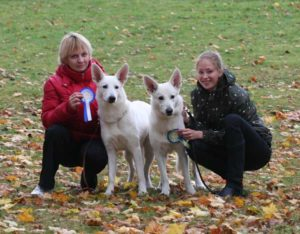DogNews Year 2008 3