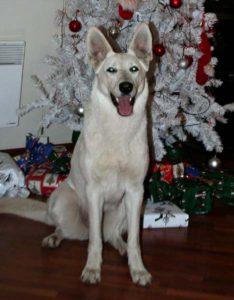 DogNews Year 2008 1