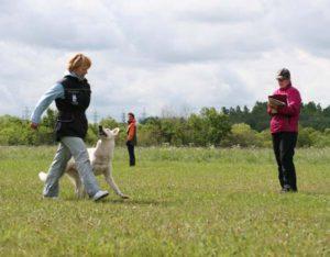 Koerauudised aastal 2009 28