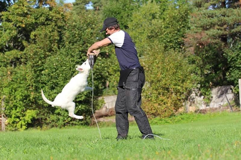 Koerauudised aastal 2014 6