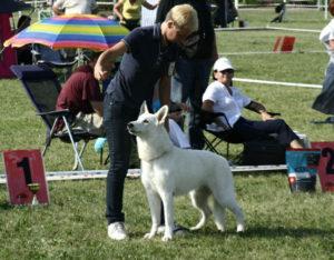 DogNews Year 2010 6