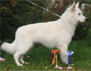 Koerauudised aastal 2007 26