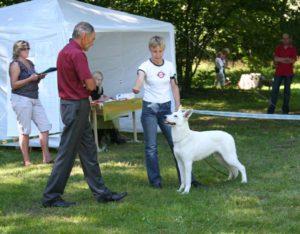 DogNews Year 2008 6
