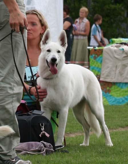Koerauudised aastal 2007 13