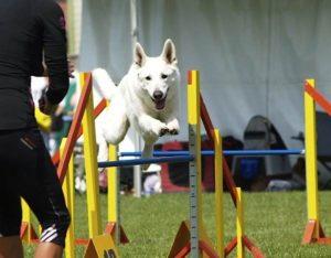 DogNews Year 2011 4