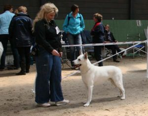 Koerauudised aastal 2009 27