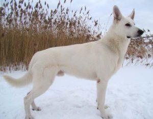 Koerauudised aastal 2009 31