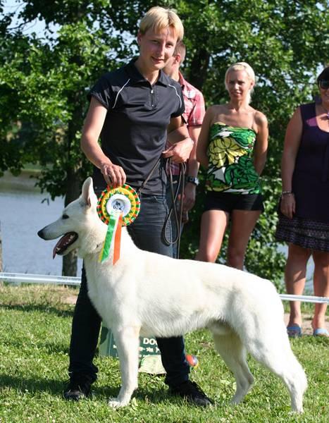 Koerauudised aastal 2009 11