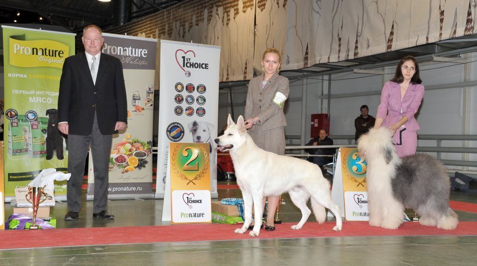 DogNews Year 2012 8