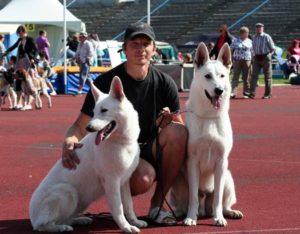 DogNews Year 2011 5