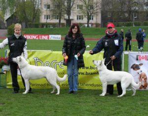 DogNews Year 2011 6