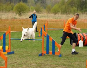 Koerauudised aastal 2010 37