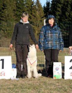 Koerauudised aastal 2013 5