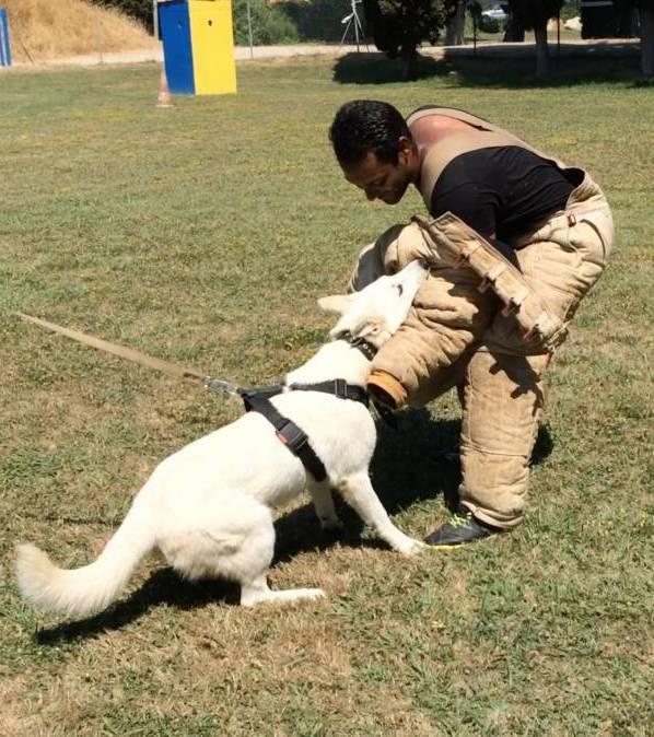 JJ di Casa Praderio X Born to Win Warrior Madfire White Swiss Shepherd Puppies - BTWW A Litter 1