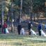 21.10.07 EVLÜ Kutsikate ja Noorkoerte Võistlus 2