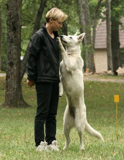 Ütlusi koerte kohta 1