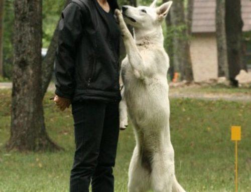 Ütlusi koerte kohta