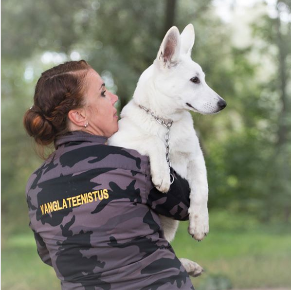 Born to Win Warrior Yasper in his working place in Estonian Prison hoping to become one day the Prison Guard Service Detection Dog 4