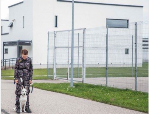 Born to Win Warrior Yasper in his working place in Estonian Prison hoping to become one day the Prison Guard Service Detection Dog