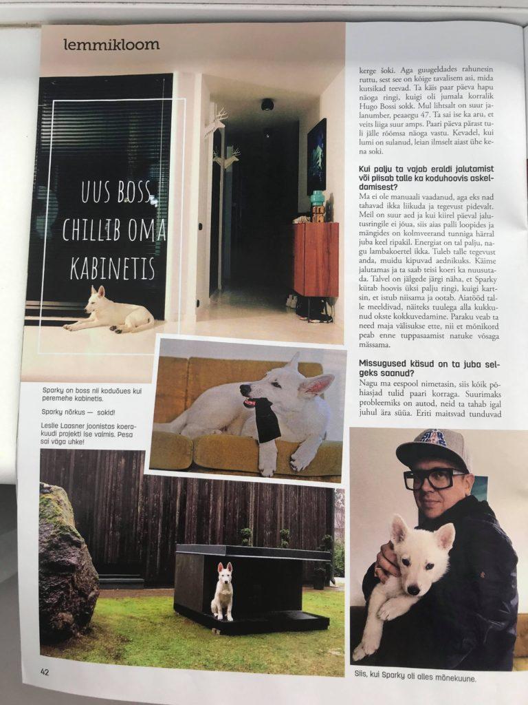 White Shepherd Puppy BTWW Zlatan got into Celebrity News 2