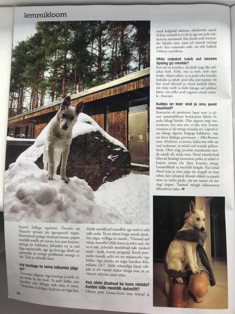 White Shepherd Puppy BTWW Zlatan got into Celebrity News 3