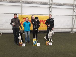 Born to Win Warrior Tyson 3 place in Agility A0 class 1