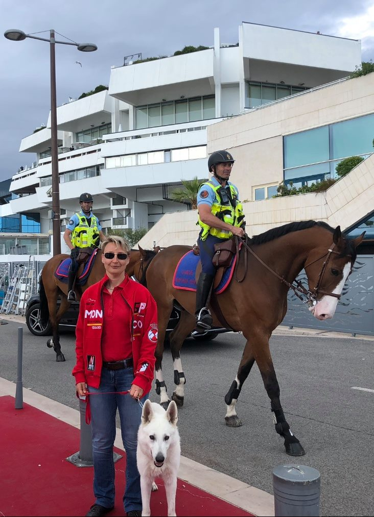 White Swiss Shepherd BTWW Wahlman and horses in Cannes, France 2
