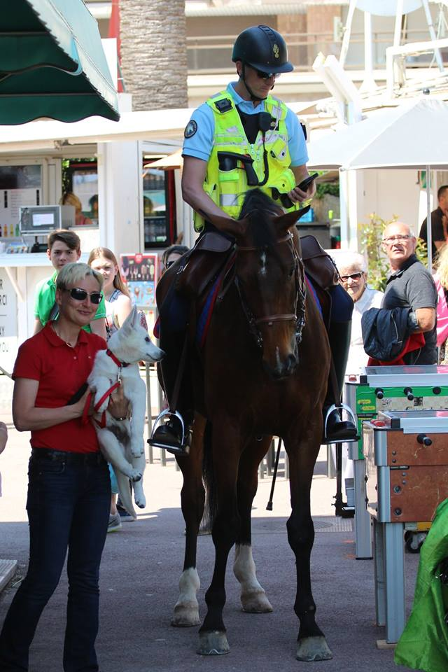 White Swiss Shepherd BTWW Wahlman and horses in Cannes, France 3