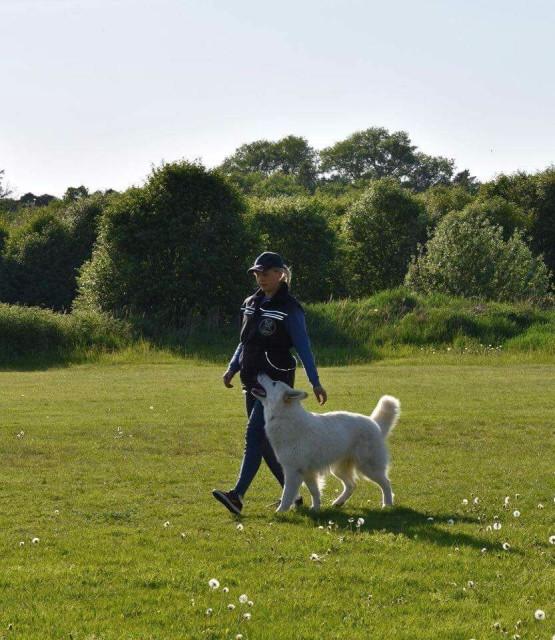 White Swiss Shepherd male BTWW Shooter BH 36