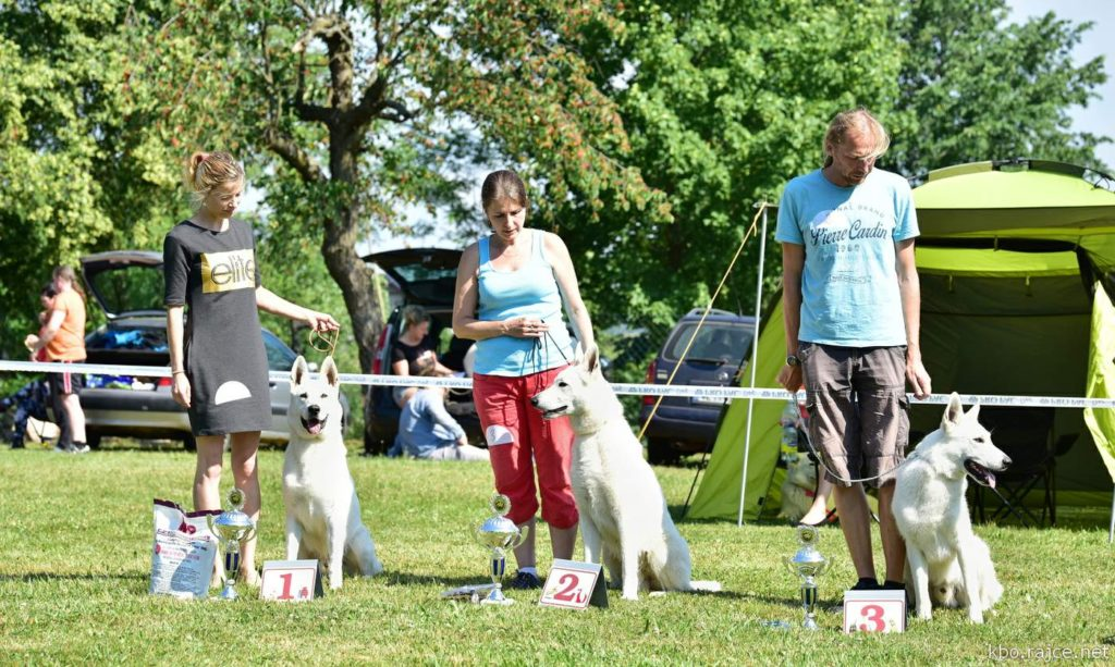 Born to Win Warrior Yoshi CAJC in Czech Republic White Shepherd Club Specialty Show 1