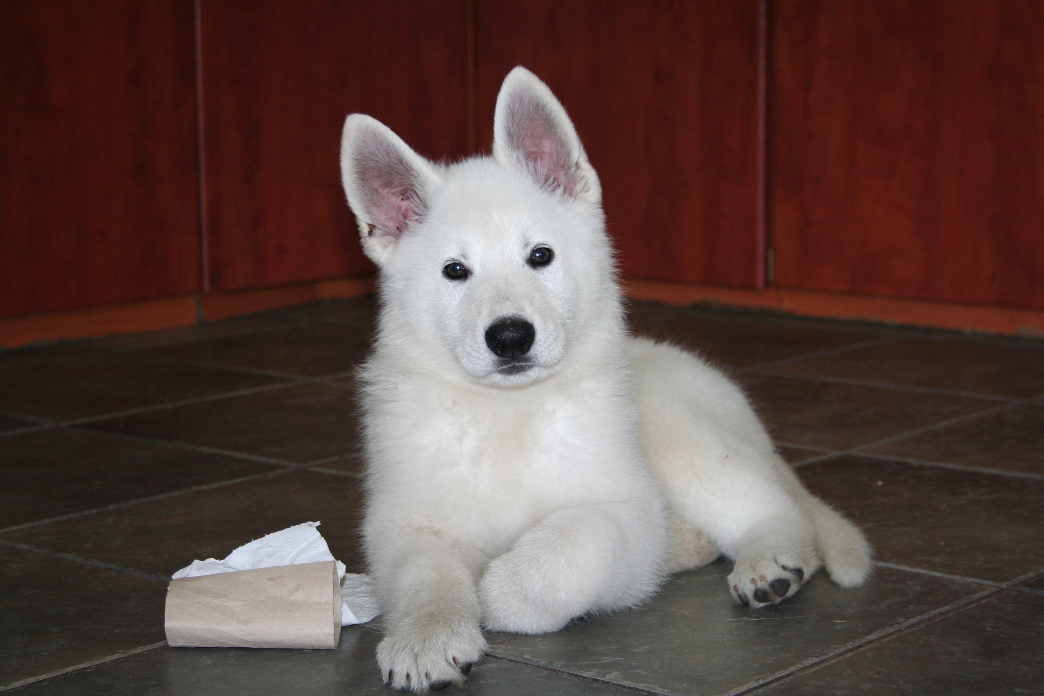 How to buy a puppy from abroad? 1