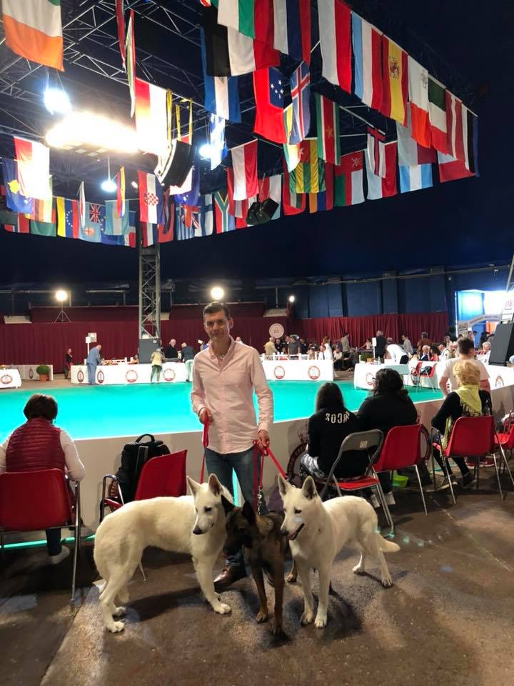 Monaco Dog Show all White Swiss Shepherds and Malinois dogs excellent character! 5