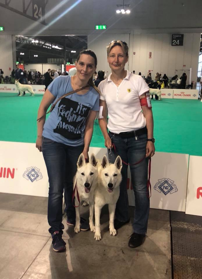BTWW Zal Italian Dog Show Junior Class Females 2 place and Excellent! 5