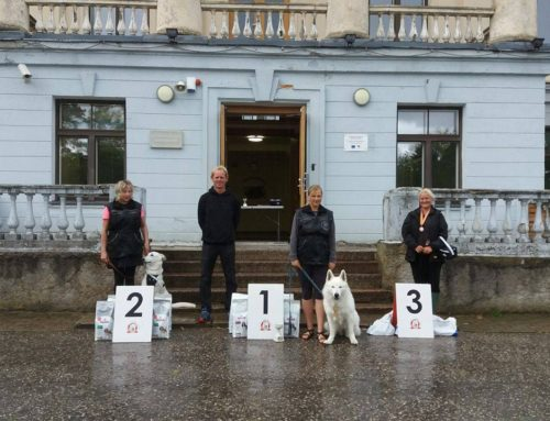 BTWW Dogs Successful in Tracking Competition