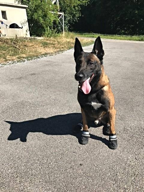 Zurich Police Has Launched Hot Dog Campaign - Hot Asphalt Can Burn Dogs Feet 1