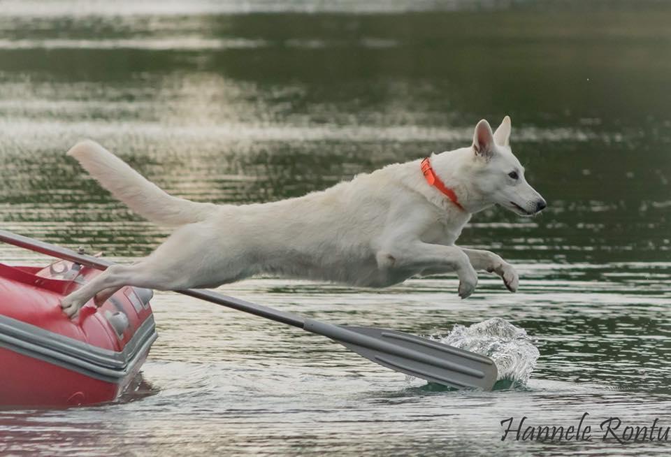Finnish Water Rescue Champion Born to Win White Optimist 6