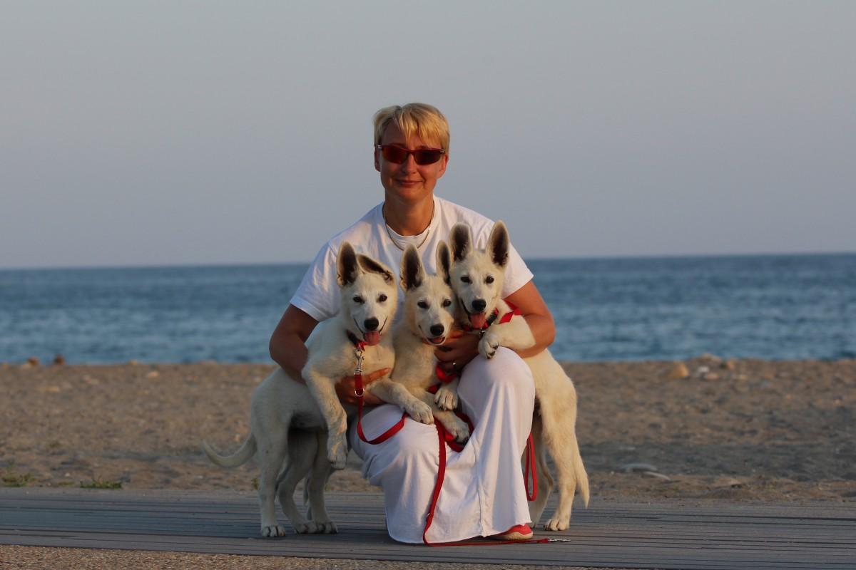 Monaco White Swiss Shepherd Puppies
