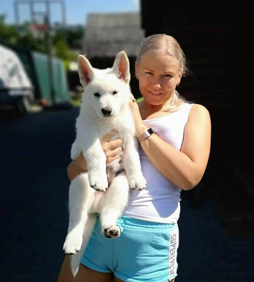 Long Coated White Swiss Shepherd Puppies - Born to Win Warrior Crazy x Born to Win White Outlaw IPO1 BH AD 46