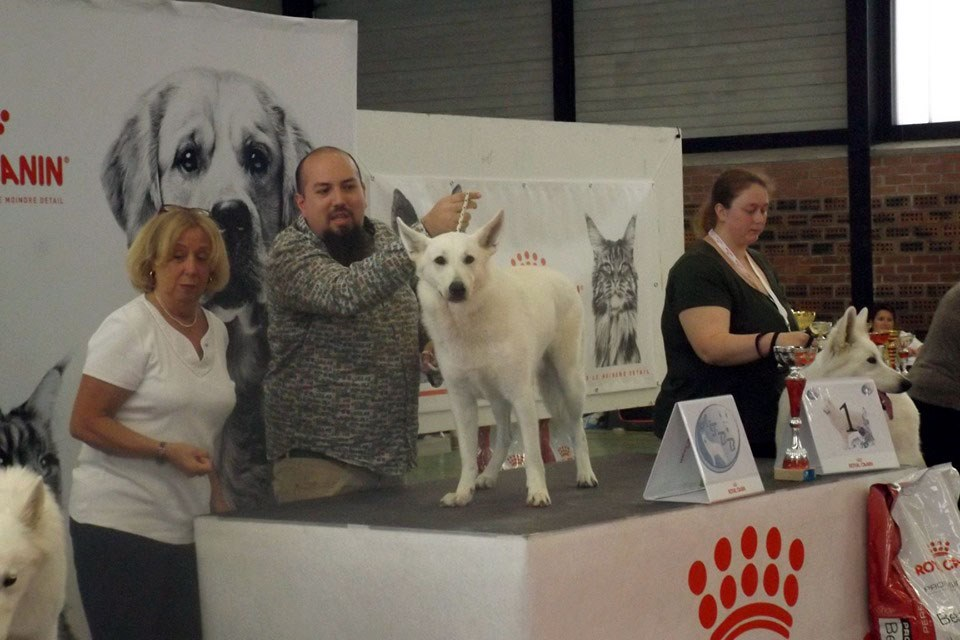 BTWW Damascus in Dog Show in France 1