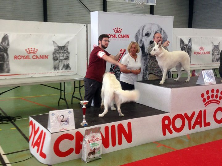 BTWW Damascus in Dog Show in France 2