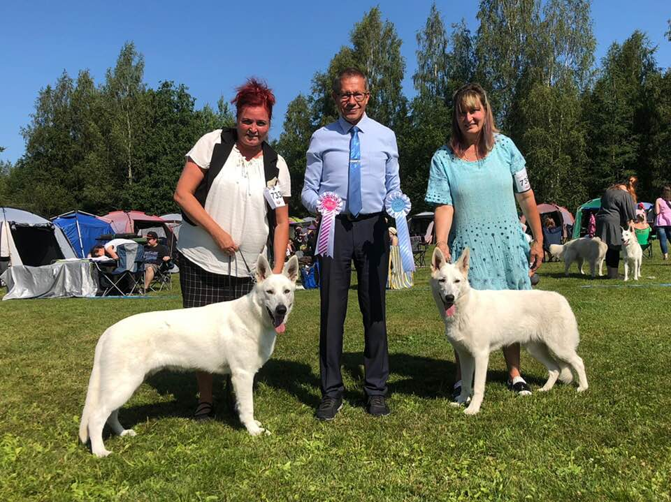 White Swiss Shepherd Born to Win White Prince Best of Breed Puppy in Finland 1
