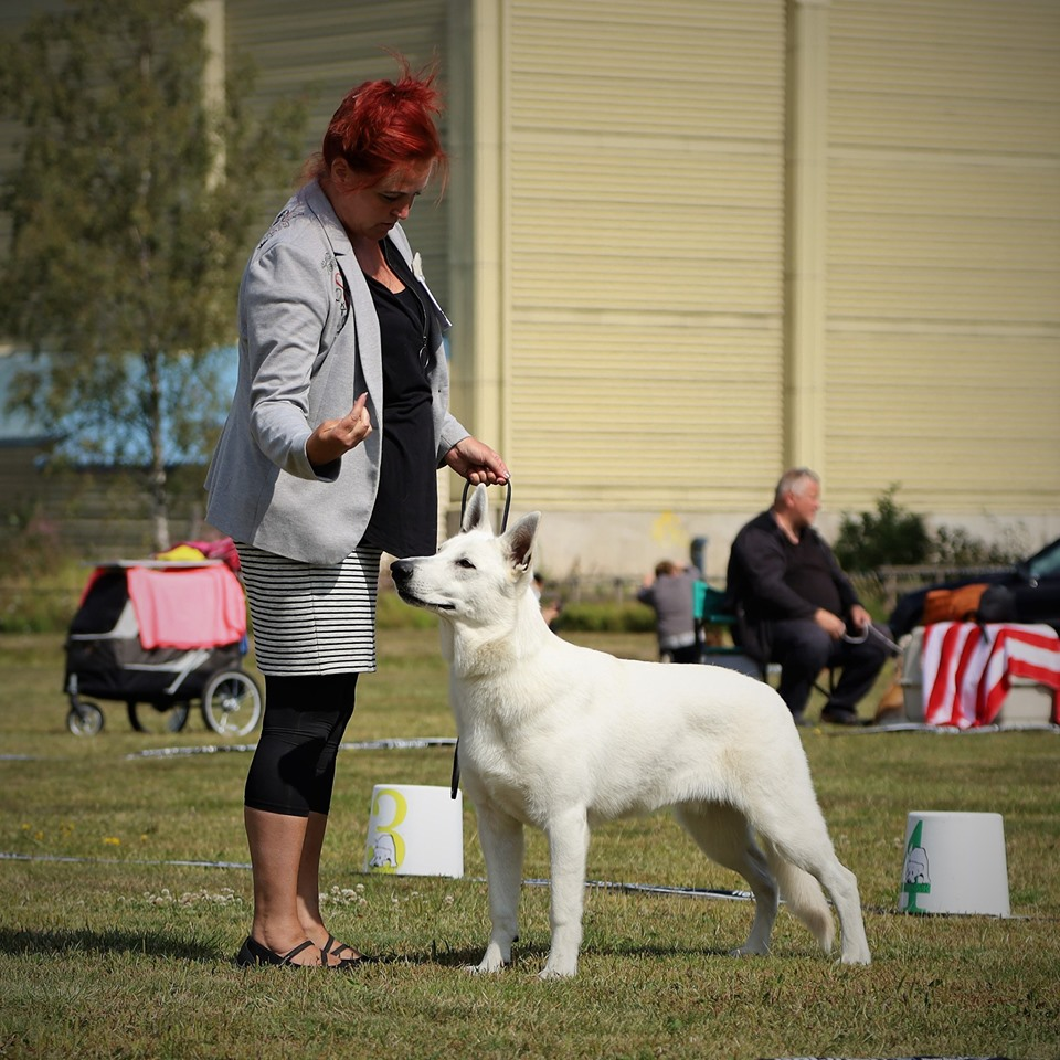 BTWW Prince Best of Breed Puppy in Finland 1