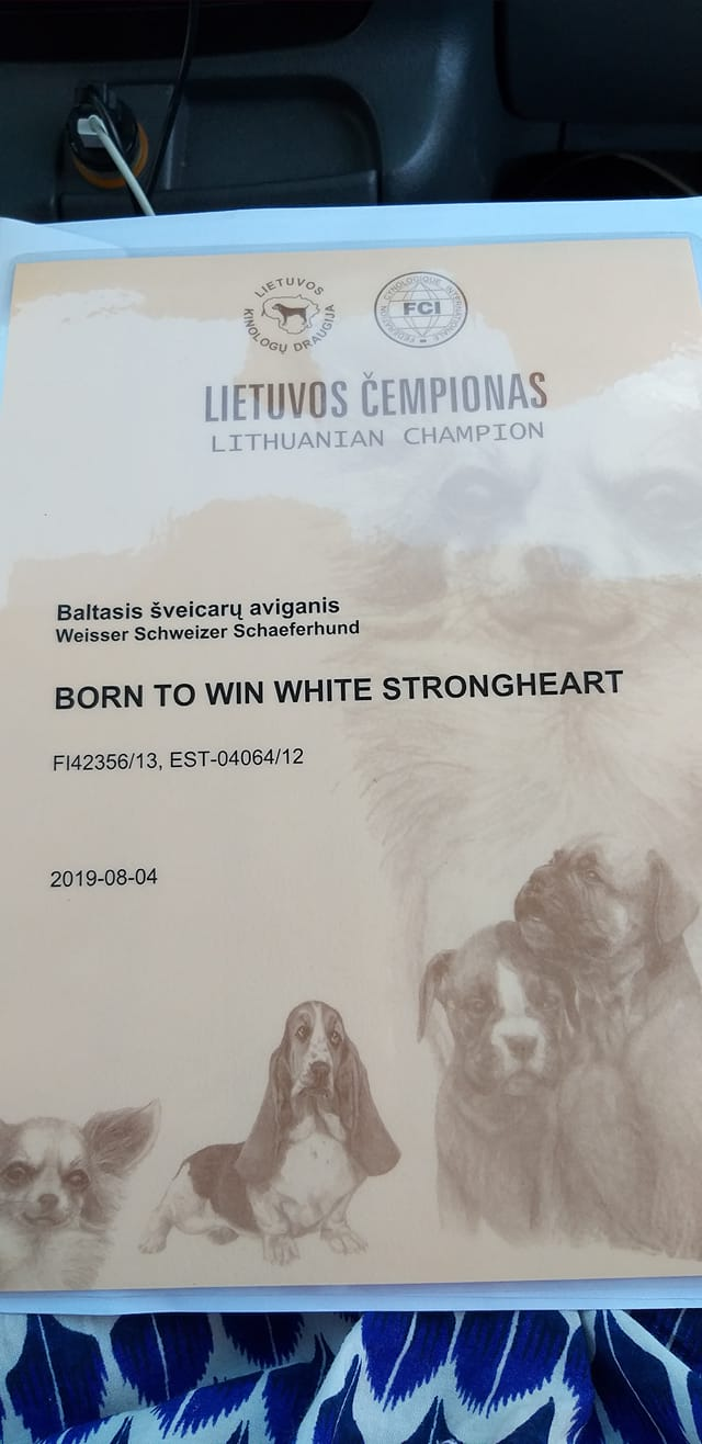 BTWW Strongheart Lithuanian Champion 28