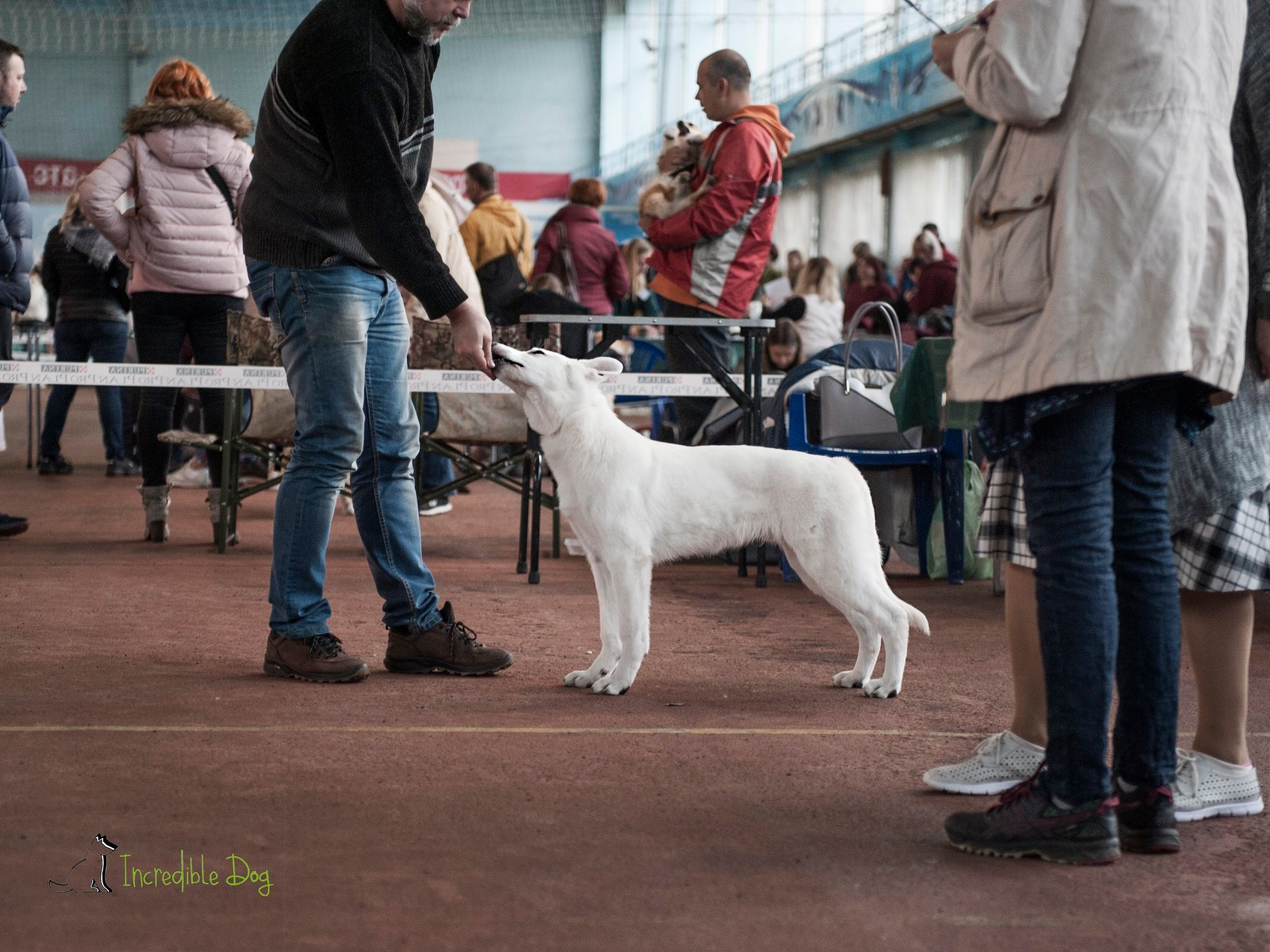 Born to Win White Zorro Puppy Favorit INCREDIBLE DOG VP, BEST PUPPY OF BREED and at MAIN RING OF BABY he got 2-nd place 2