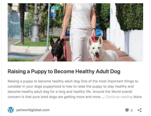 How to Raise a Puppy to Become a Healthy Adult Dog – petworldglobal.com