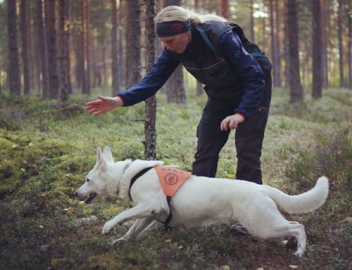 Born to Win White Oodi Search & Rescue Regional Championship Silver in Finland